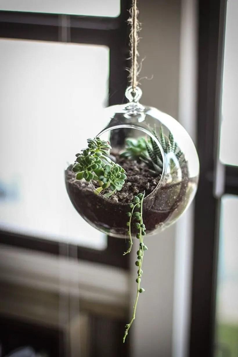 Most beautiful hanging globe terrarium to create look attractive