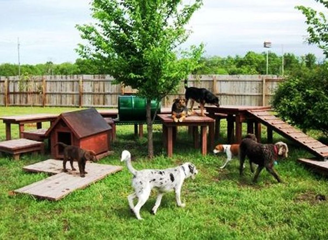Wooden dog house and playground