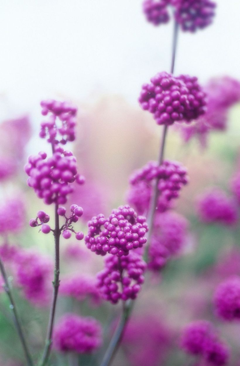 Bery-bery-plants-and-flowers.-