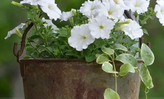 Unique-hanging-zinc-pot-planter-for-your-porch-decoration
