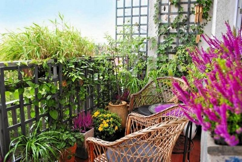 Decorative-plants-with-create-a-small-structure-for-support-or-buy-a-trellis-for-climbing-plants.-you-can-do-it-with-wooden-slats-or-bent-steel-rods.