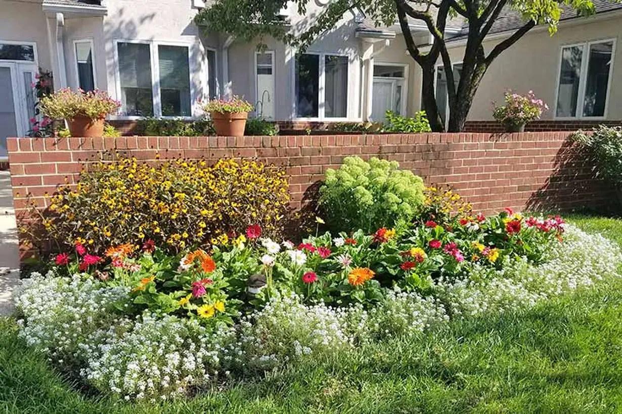 1add-sweet-alyssum-to-garden-borders-and-beds