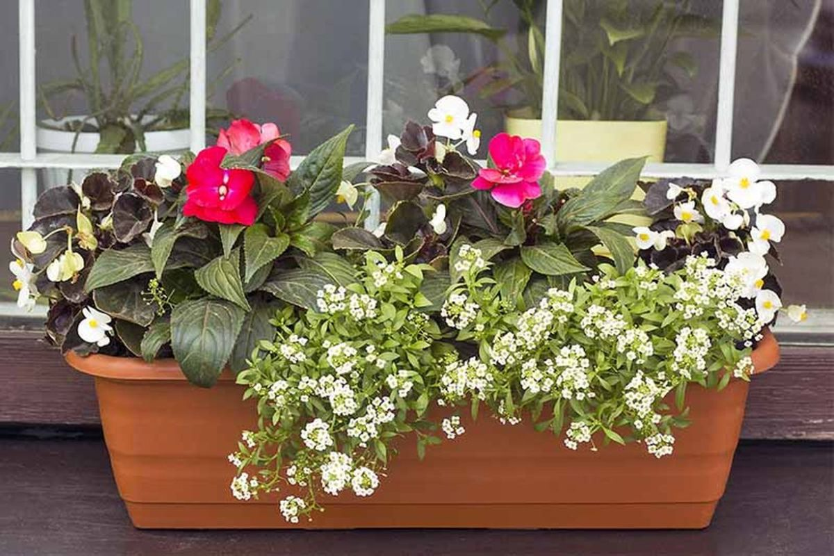 1add-sweet-alyssum-to-window-boxes-and-planters