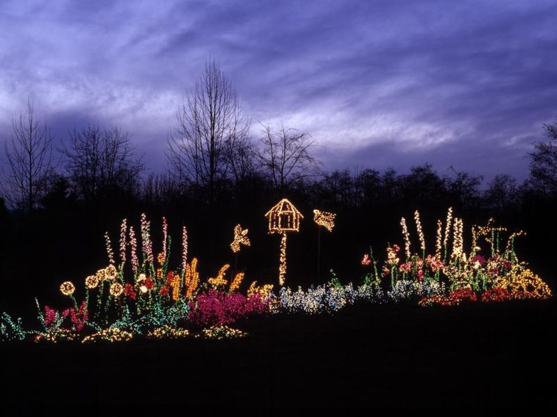 Rather-than-turn-their-garden-into-a-traditional-christmas-light-display.