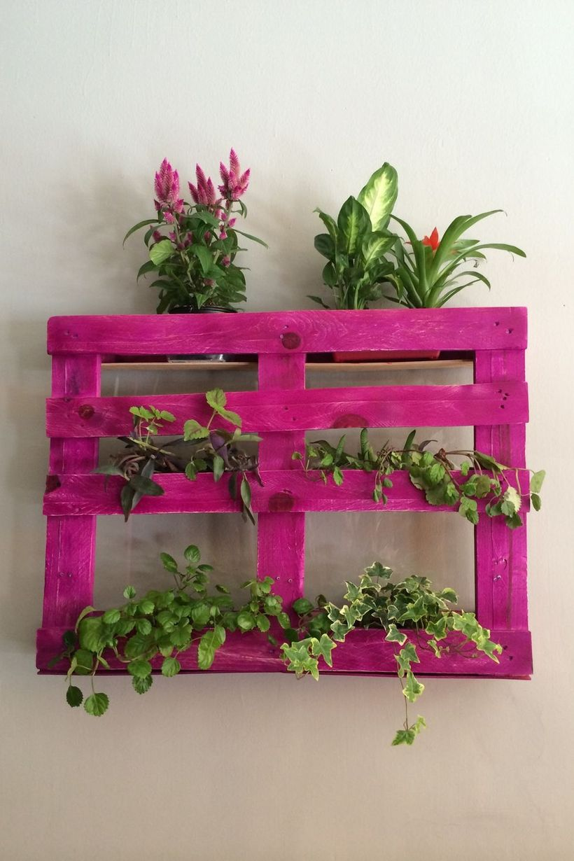 Plants-on-pink-shelf-mounted-on-wall-at-home-royalty-free-image-677144299-1552927597