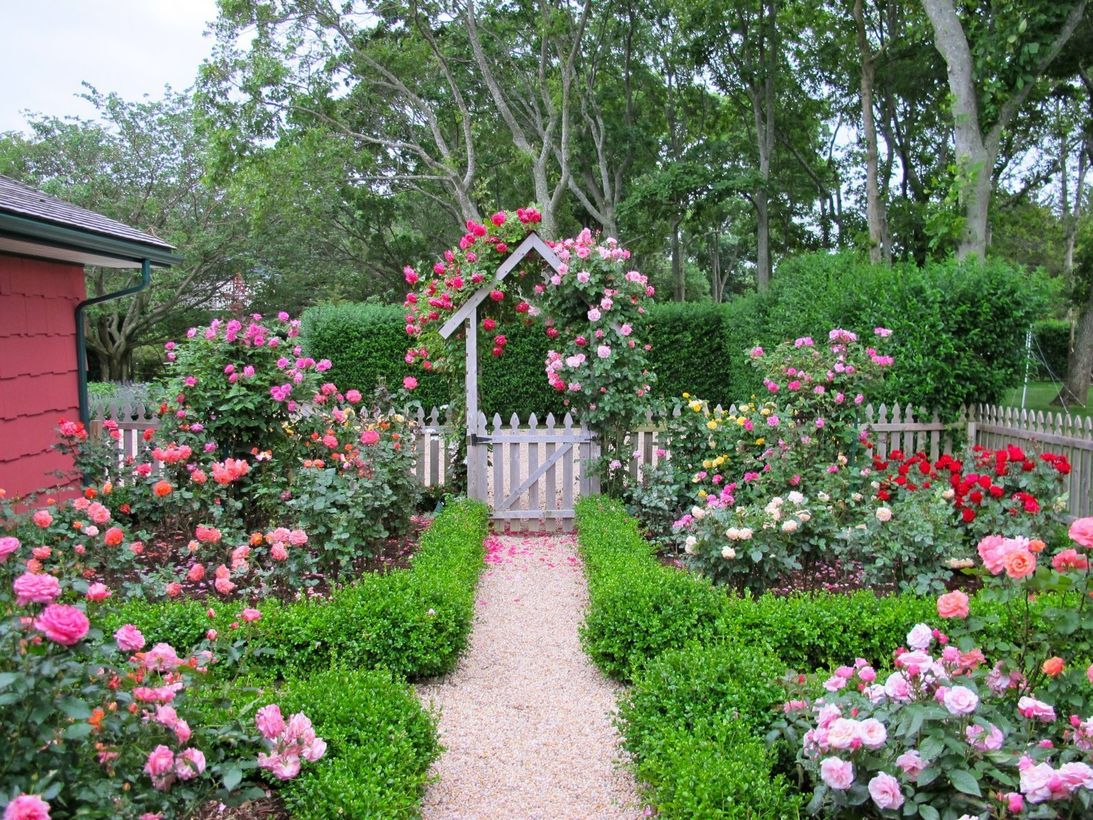 Cottage-garden-design-with-roses-wilson-rose-garden.