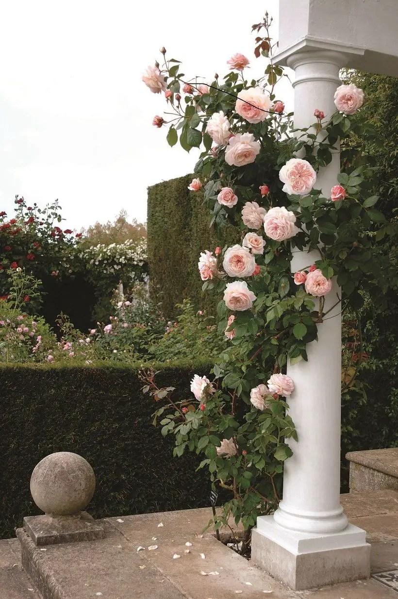 Rose-garden-design-20