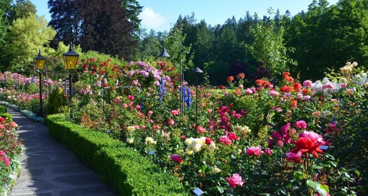 Trump-rose-garden