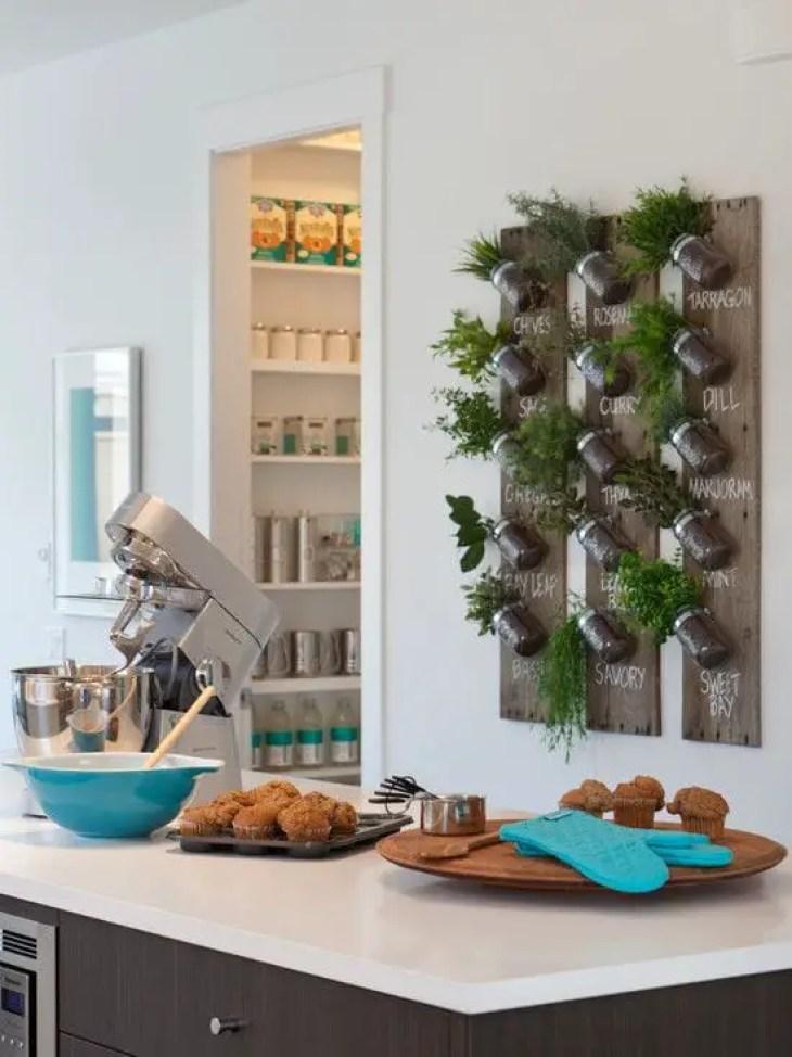 Kitchen-plant-4
