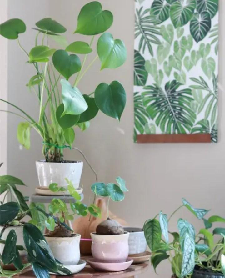 Plant-4-4