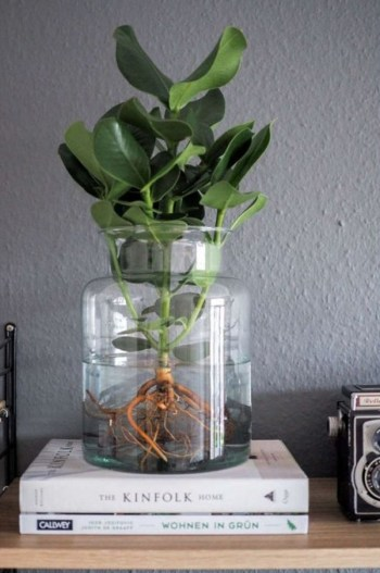 Diy-indoor-water-garden-ideas-with-mason-jars