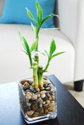 Indoor-bamboo-water-garden-for-coffee-table