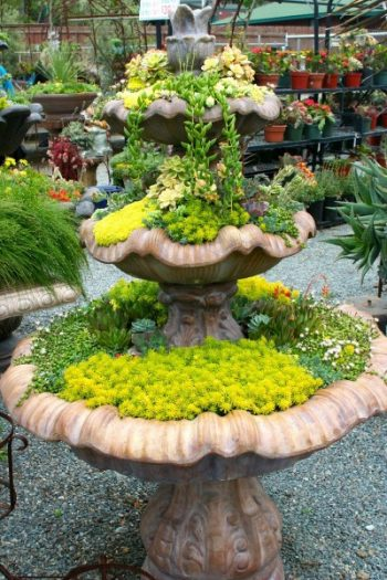 Succulent-fountain-e1402429679578