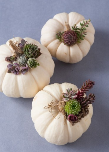 I-want-these-succulent-topped-pumpkins-how-cute