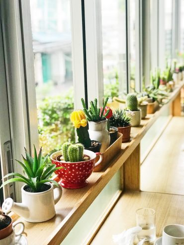 Find+cute+pots+to+display+your+succulents