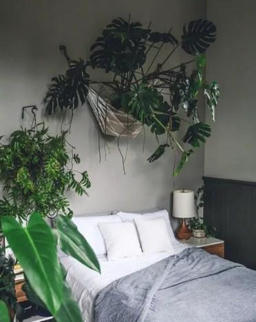 Bedroom-hanging-monstera