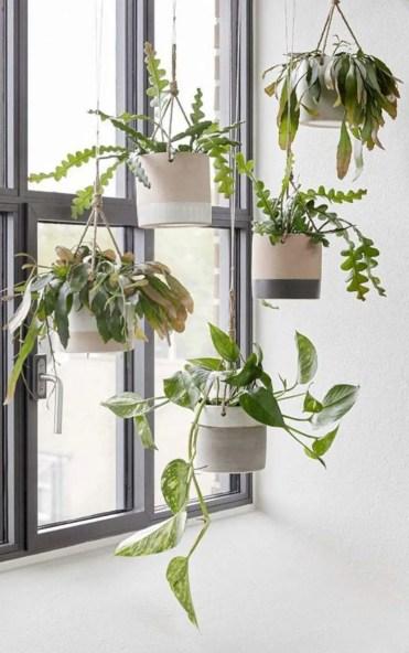 Marvelous-hanging-plants-ideas