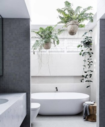 Minimalist bathroom with potted greenery