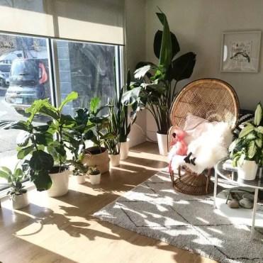 Stylish-modern-sunny-indoor-garden