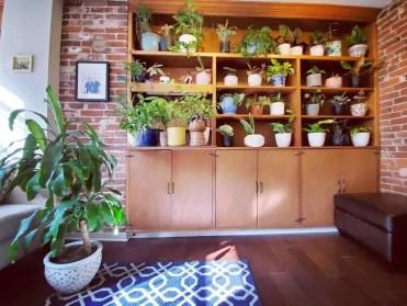 1-plant-shelf-indoor-garden-ideas-gardenonthegram_-20200912-ylu8es