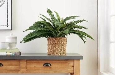 Best_fake_plants-650x433-1
