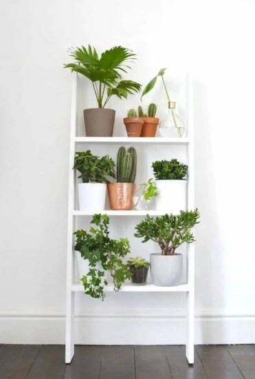 Home-decor-ideas-with-plants-3