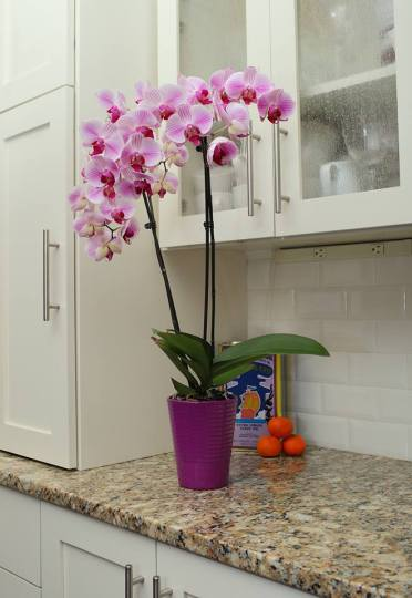 Decorate-kitchen
