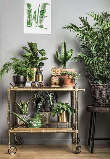 1-01-rolling-cart-filled-with-several-pots-of-plants-and-home-decor