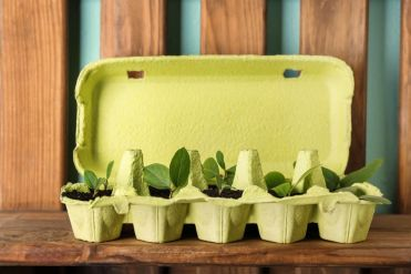 Diy-planter-egg-carton