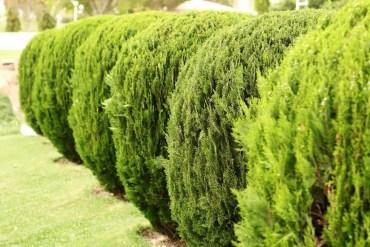 19-garden-hedge-designs-870x580-1