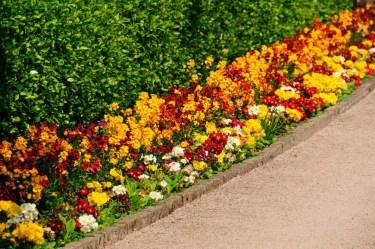 25-garden-hedge-designs-870x578-1