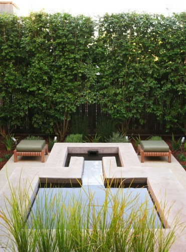 Italian-buckthorn-adds-greenery-to-a-modern-patio