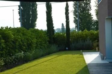 Hedge-growing-garden-privacy-ideas