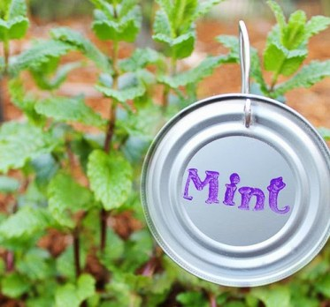 How-to-make-plant-markers-from-can-lids