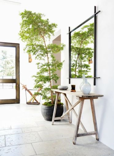 16-tall-tree-in-a-pot-covered-with-moss-and-placed-in-the-entryway