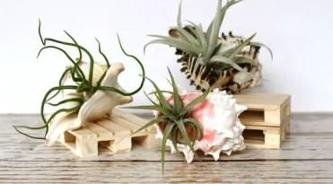 Air-plants-in-shells-diy