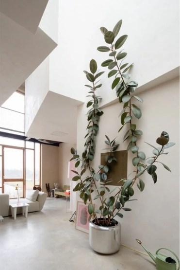 Climbing-plant-900x1346-1