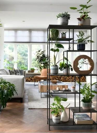Cool-plant-rack-divider-for-living-room