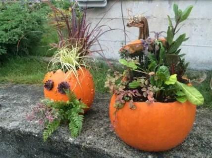 Pumpkin_planters_6_m4