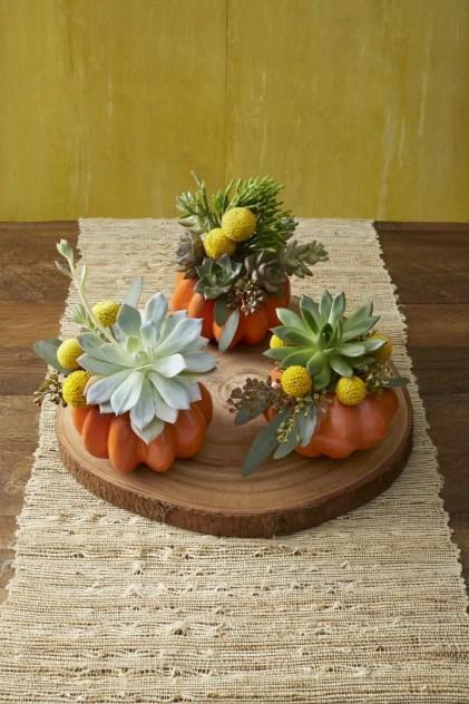 Succulent-pumpkin-planter-1596742976