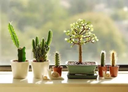 1-kleine-Kaktus-Dekoration-Ideen6