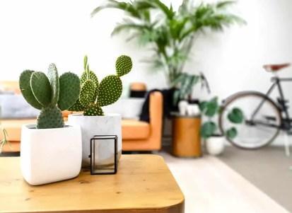 Wohnzimmer-mit-kleinem-Topf-innen-Kaktusfeigenkaktus-auf-Couchtisch-ss