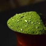 chimarrao fresco com erva-mate com folha