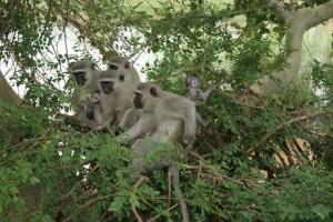 monkeytree