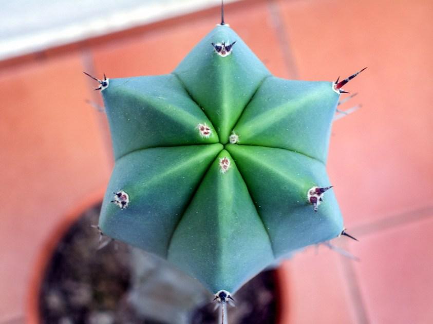Cactus en mi casa, Alcasser, Valencia © mateoht 1990-2014 - http://lafotodeldia.net