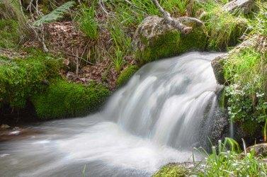 Cascada en el bosque, Asturias. © mateoht 1990-2014 - http://lafotodeldia.net