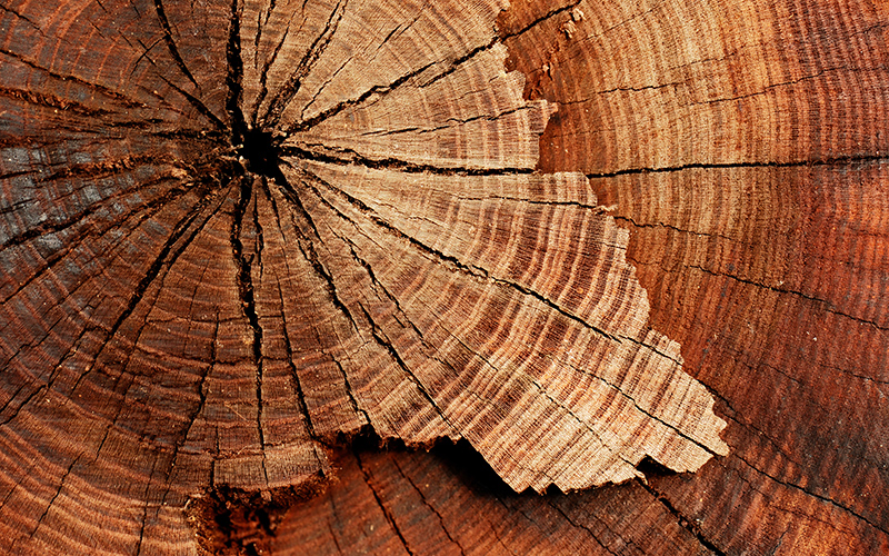 tree core
