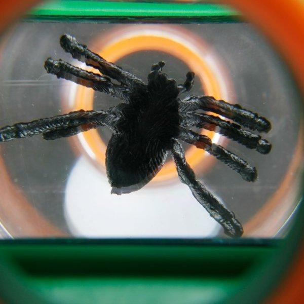 Lupa vizor pentru studierea insectelor: 4x, 6x 13