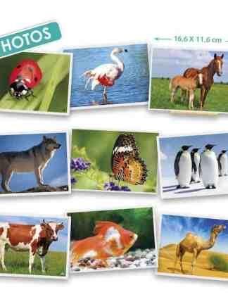 Fotografiile Animalelor