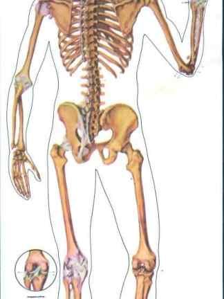 Schelet uman - spate